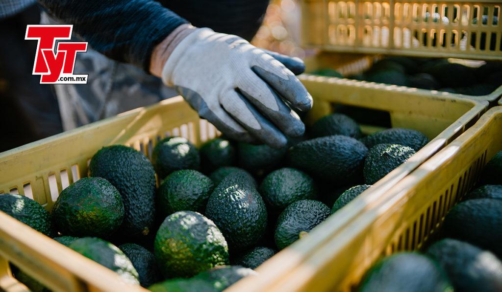 Exportación de aguacate y tomate vence a la pandemia