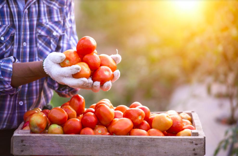 Abasto de alimentos agrícolas resiste embates de la pandemia